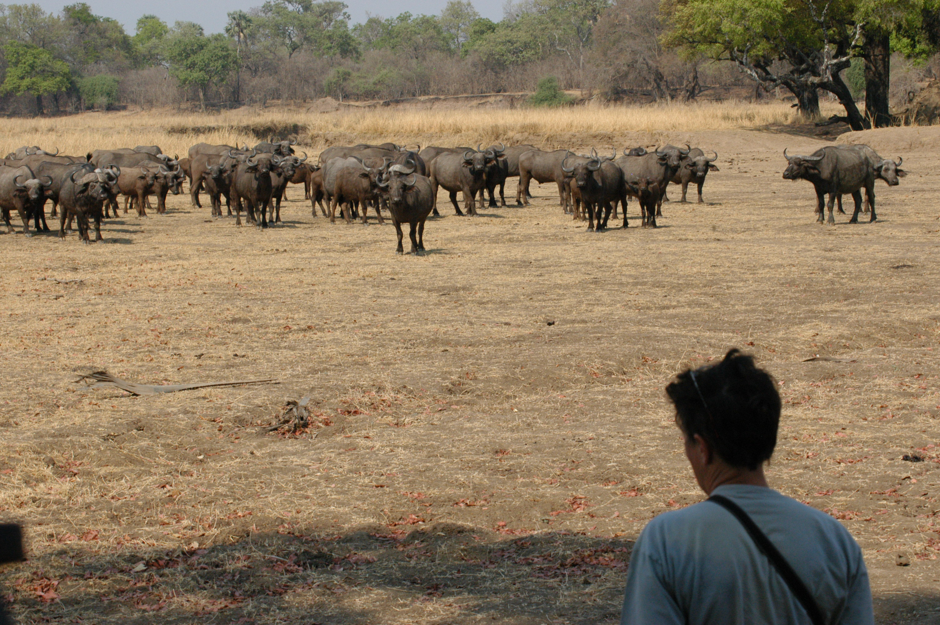 Maatwerk reizen ZAmbia South Luangwa