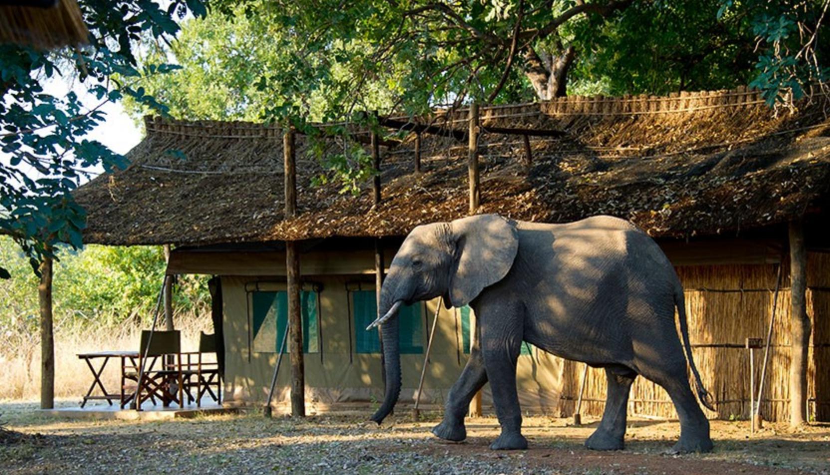 maatwerk safari