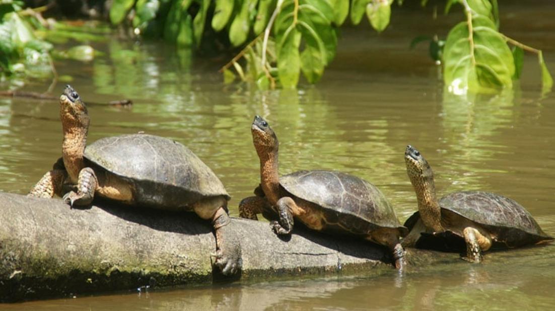 maatwerk reizen Costa Rica tortuguero